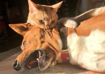 Funny Shots of the Uneasy Relationship Between Cats and Dogs