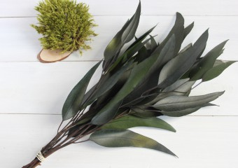 Feng Shui Plants. 10 Plants That Take Bad Energy From Your Home