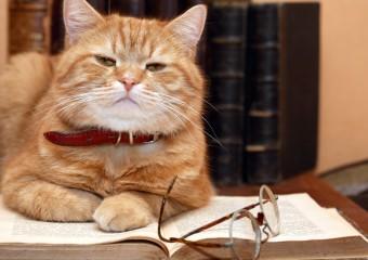10 Most Intelligent Animals