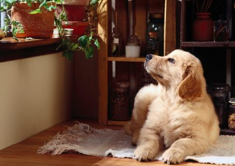 10 Breeds of Dogs Ideal for an Apartment