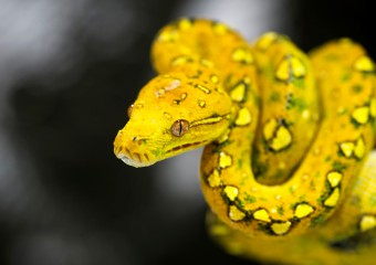 Beautiful Awful! Snakes That Fascinate With Their Appearance