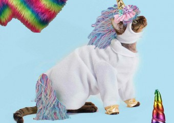Funny Costumes From Aliexpress for Pets