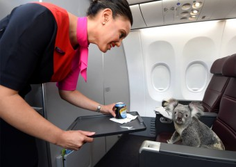 The 20 Most Fun and Unusual Animal Air Passengers